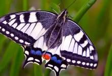 Why rain doesnt kill butterflies