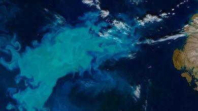 Photo of Arctic waters began to bloom