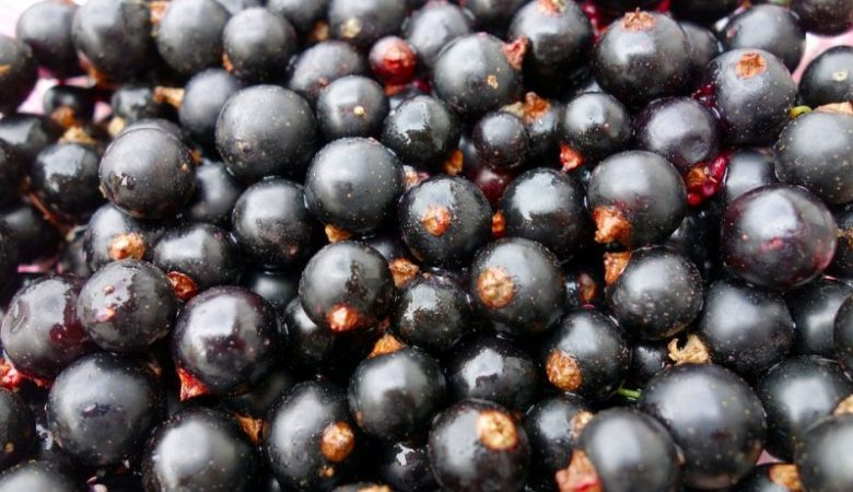Doctors called the most useful berry prevent cancer and strengthen the heart