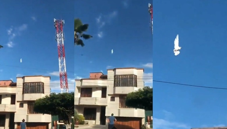 In Colombia captured on video hovering in the sky of a white dove