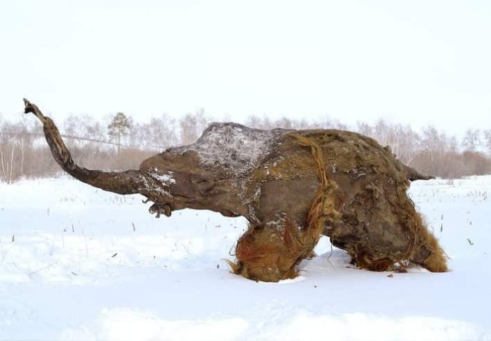Mammoths 5