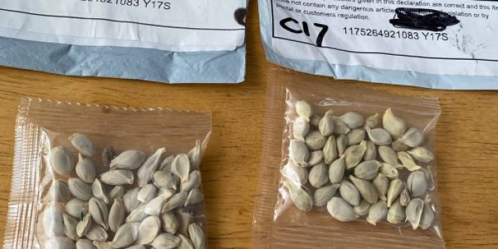 Mysterious Chinese seeds spawn across US 2