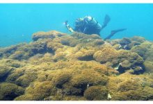 Photo of Mysterious new invasive algae strangle Hawaii's coral reefs