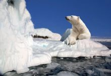 Photo of 20 facts about the North Pole that not everyone knows