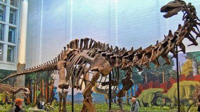 Photo of Distant human ancestors ate dinosaurs