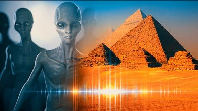 Photo of Elon Musk said that the pyramids built by aliens