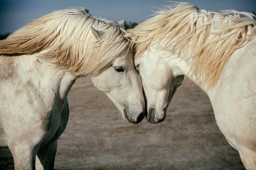 horses file 1252