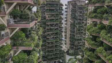 "Photo of Why Chinese project of a residential complex with a ""vertical forest"" failed?"