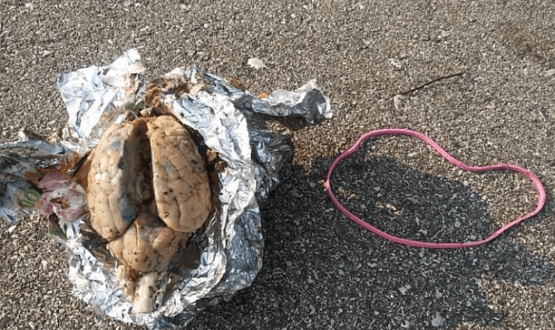 man walked along the beach and found a brain wrapped in foil