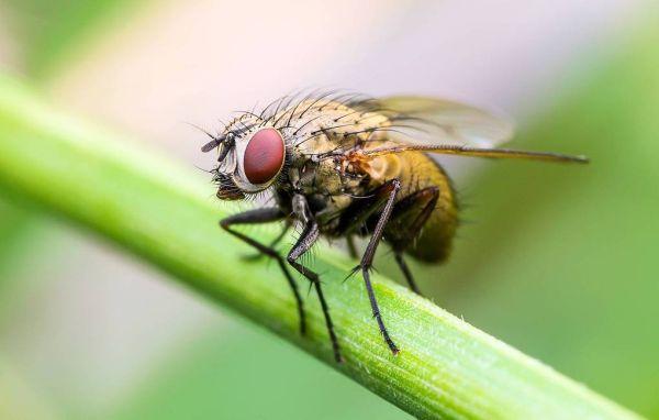 Drosophila flies see life in orange