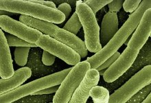 Arthritis drug protects the body from superbugs