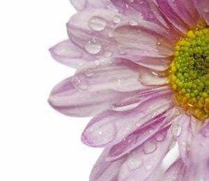 Sitater om sorg – Samling av flotte sitater til den som sørger