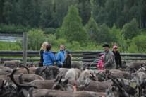 Finfin guidning av Ängesåns sameby, tack till Britta, Arne, Ingegerd med flera.