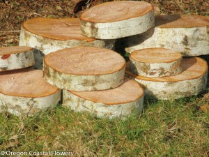 Birch Display Rounds