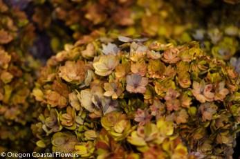 Double Bloom Antique Hydrangea