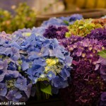 Exotic Wholesale Cut Hydrangea Flowers