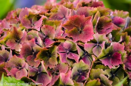 Fresh Antique Bridal Bouquet Hydrangea
