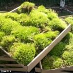 Fresh Mood Moss