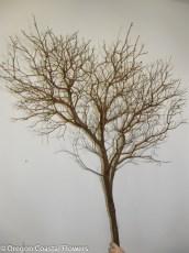 Leafless Manzanita Branches