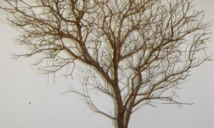 Manzanita Branches, with leaves, leafless, sandblasted