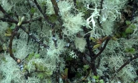 Grandma's Apple Tree Mossy Branches