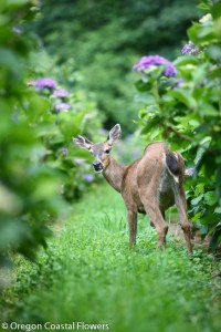 Naturally Grown Fresh Hydrangea Flowers