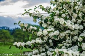 Oregon's Best Specialty Cut Flowers