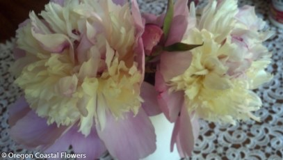 Peony Flowers for Your Wedding