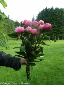 Pink Bridal Bouqet Peony Flowers
