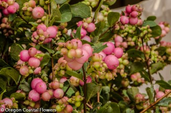 Pink Snowberries Perfect for a Fall Wedding