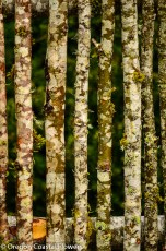 Unique Birch Wood Fence