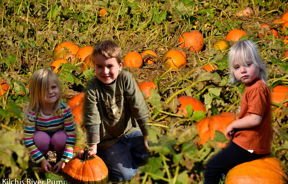 Kilchis River Pumpkin Patch & Corn Maze