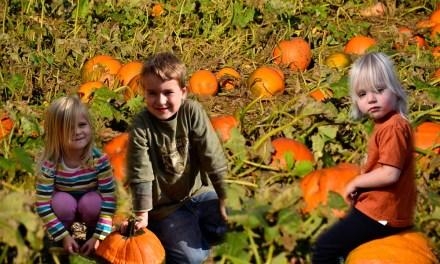 Kilchis River Pumpkin Patch & Corn Maze