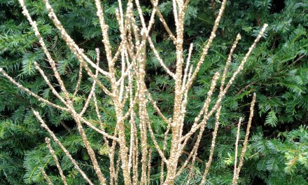 Glittered Holiday Branches