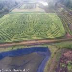 oregon coast pumpkin patch & corn maze