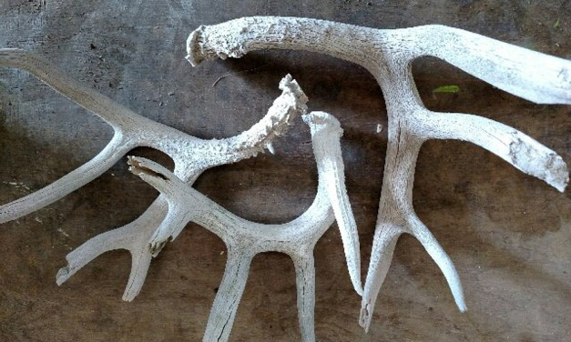 Rustic Shed Antlers in Floral Displays