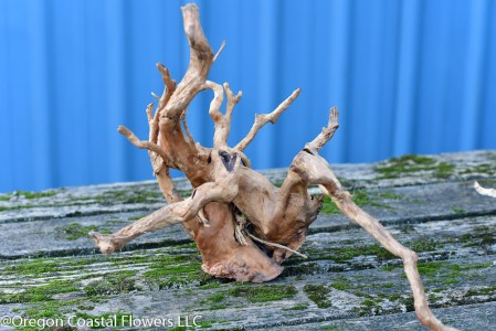Spider Wood, Spider Roots, Azalea Roots sold bulk wholesale