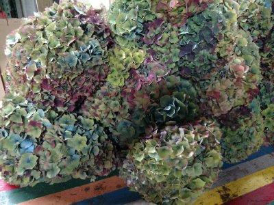 antique hydrangea (2)