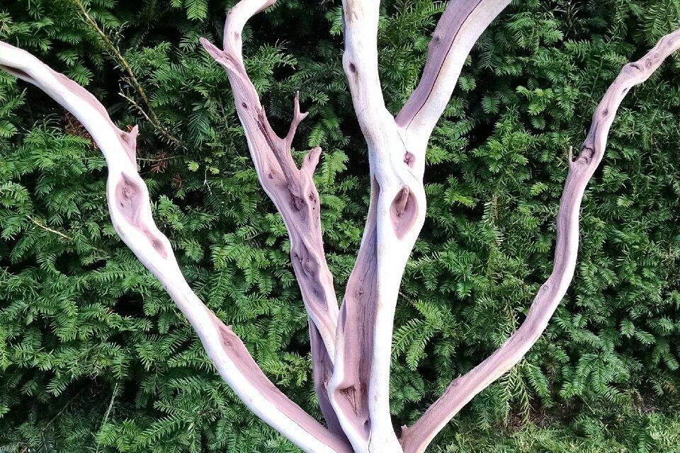 Manzanita Branches, leafless & sandblasted 3.16.17