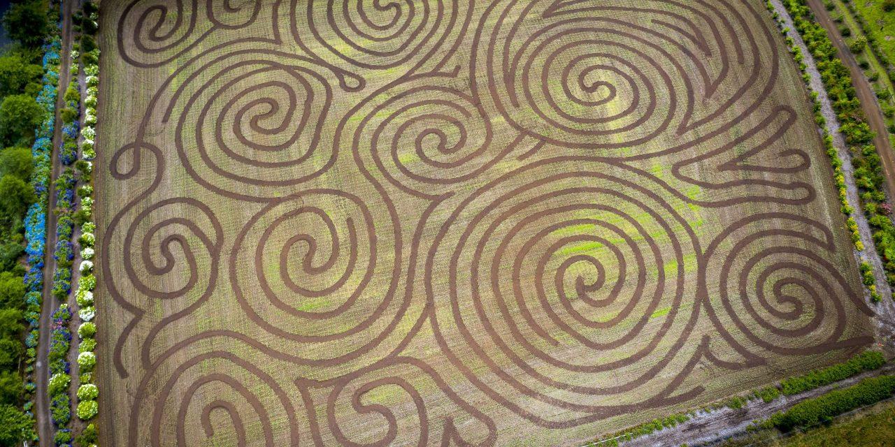 7.02.20 Kilchis River Pumpkin Patch & Corn Maze