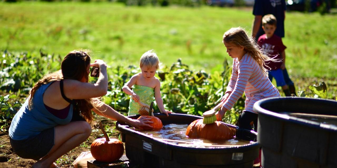 2019 Kilchis River Pumpkin Patch & Corn Maze