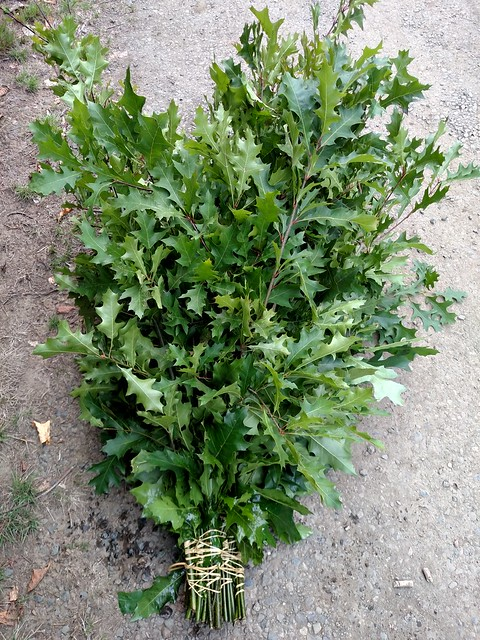 green oak branches