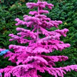 pink flocked trees