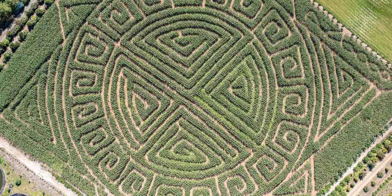 2021 Kilchis River Pumpkin Patch & Corn Maze opening soon.