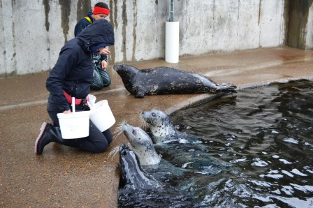 Tazzy, Skinny, Pinky and Tater during a feeding session behind the scenes at the Oregon Coast Aquarium.