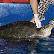 turtle tub