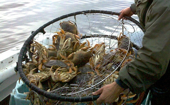 Dungeness crab fishing strike extends along the west coast for Crab fishing oregon