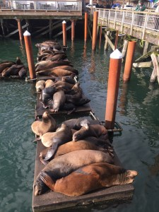 Sea lions in Newport, Oregon bayfront