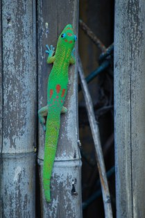Lots of gecko watching