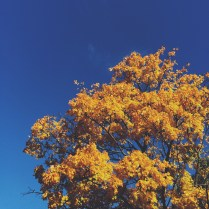 Bluebird day in Fall - Copenhagen colour